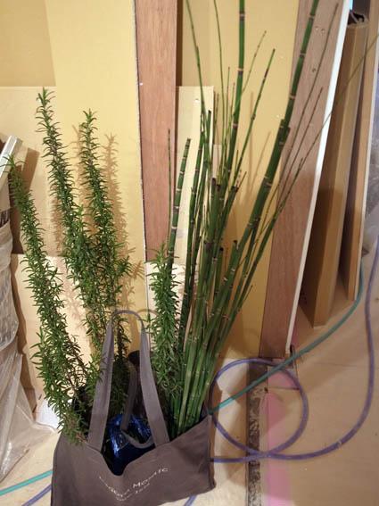 140123veranda_plants-2